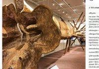 Рустам Минниханов поделился с фото 150-летнего дерева, выставленного в Давосе