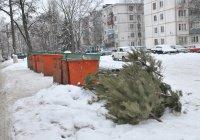 В Казани открыли пункт приема живых новогодних елок