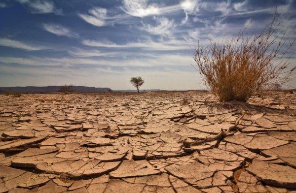 В Саудовской Аравии продолжается засуха.