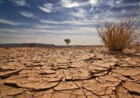 В Саудовской Аравии молятся о ниспослании дождя