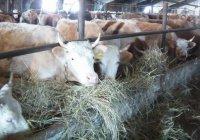 Второй в России Центр повышения квалификации сельхозработников появится в РТ