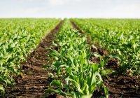 Агропром Татарстана наградили на всероссийском совещании