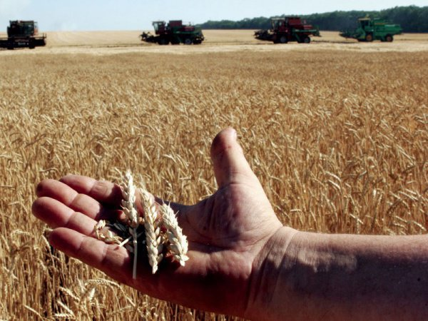Сельхозпредприятия РТ закончили год с прибылью