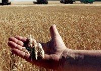 Сельхозпредприятия РТ показали 9,6% рентабельности