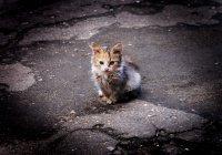 Богословы Турции: жестокость к животным – тяжкий грех