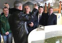 Рустам Минниханов увидел, как разводят рыбу под Казанью