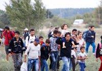 Во Франции фермер заплатит крупный штраф за помощь беженцам