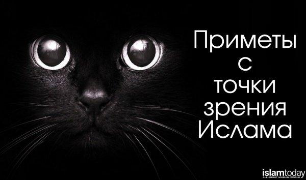 Черная кошка - предупреждение о грядущей беде?