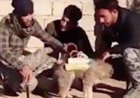 ИГИЛ использует щенков в качестве террористов-смертников (Видео)