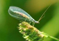 Казанская компания построила в Адыгее фабрику полезных насекомых