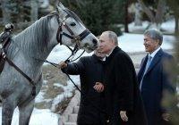 Алмазбек Атамбаев подарил Владимиру Путину породистого скакуна (Фото)