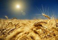 Россия увеличит экспорт сельхозпродукции в мусульманские страны