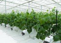 Татарстан занял 5 место по промышленному производству овощей