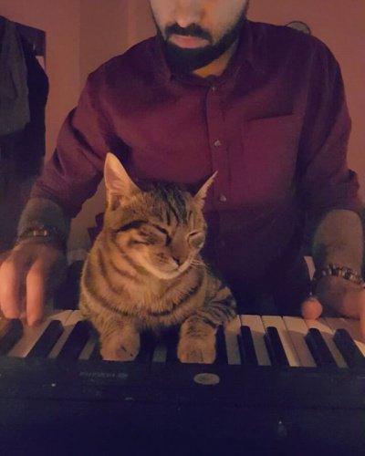 Кот изТурции покорил пользователей Инстаграм любовью кмузыке