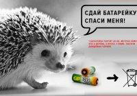 В Елабуге горожане сдают батарейки в рамках акции «Спаси ежика!»