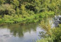 Самая чистая река Татарстана протекает в Лениногорском районе