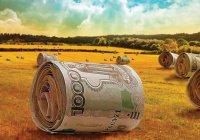 Сельхозпроизводителей РТ поддержат грантами на сумму 445 млн рублей