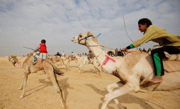 Самое популярное зрелище на Востоке: верблюжьи бега