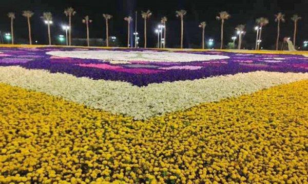 Пустыня в Аравии расцвела, и это не мираж