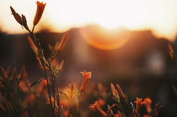 18 аятов Корана о том, как прекрасен мир