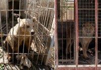 Иракцы спасают животных из зоопарка Мосула (Фото)