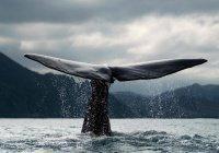 Активисты из Татарстана подключились к борьбе с «синим китом»