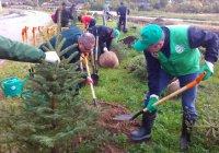 В Татарстане проходит акция «День посадки леса»