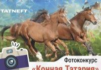 Татнефть ищет красивые фотографии лошадей