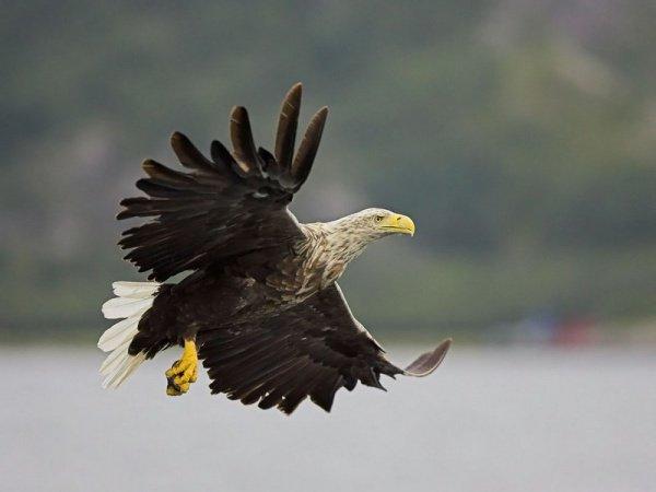 Орланы в Татарстане.