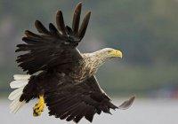 Орнитологи установили видеонаблюдение за гнездами орланов