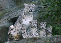Хлопонин предложил создать в Татарстане «кошачий парк»