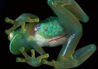 Можно ли использовать лягушек для проведения опытов?