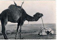 Так выглядели мусульманские открытки 100 лет назад