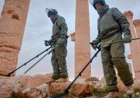 10 школ и 9 мечетей российские саперы разминировали в Пальмире