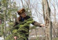 Пенсионер из Куюков в одиночку посадил лес
