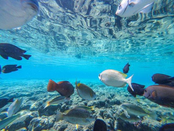 Подводные экскурсии в Турции.