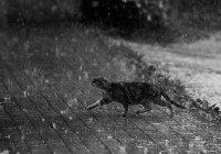 Синоптики Татарстана предупреждают о сильных дождях