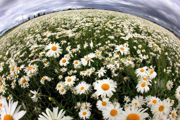 В общей сложности город украсят 3 вида цветочных растений