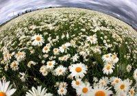 Мамадыш украсят 30 тысяч цветов