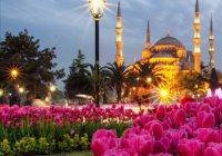Стамбул расцвел миллионами тюльпанов