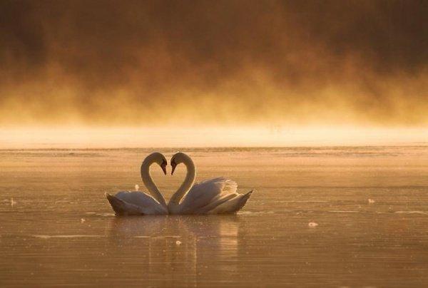 Аяты Корана о любви