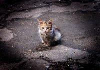 В Альметьевске подросток спас переходившего дорогу котенка