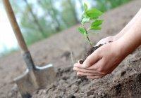 40 новых деревьев посадят на казанской Аллее депутатов