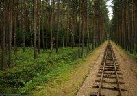 В Татарстане вдоль ж/д путей посадят новые леса
