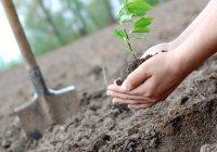 В Татарстане продлили «День посадки леса» до 20 мая