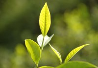 В Нижнекамске посадили 3 000 деревьев