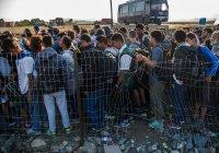 Польские СМИ: Россия хочет захватить Польшу с помощью мигрантов