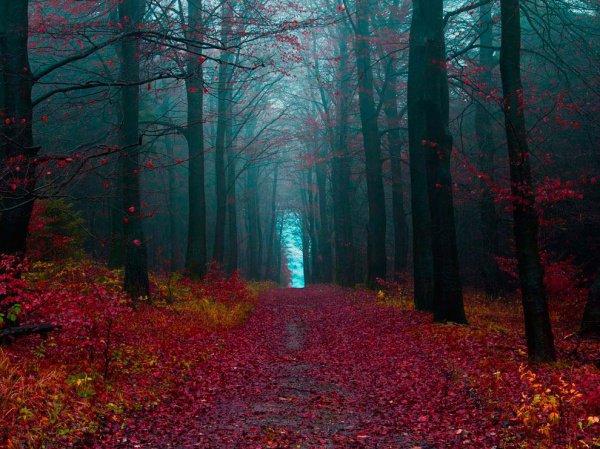 Татарстан посетили лесоводы из Германии