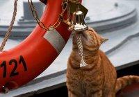 Минобороны показало кота, ходившего на кораблях РФ к берегам Сирии