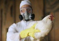 В Татарстане обнаружен птичий грипп